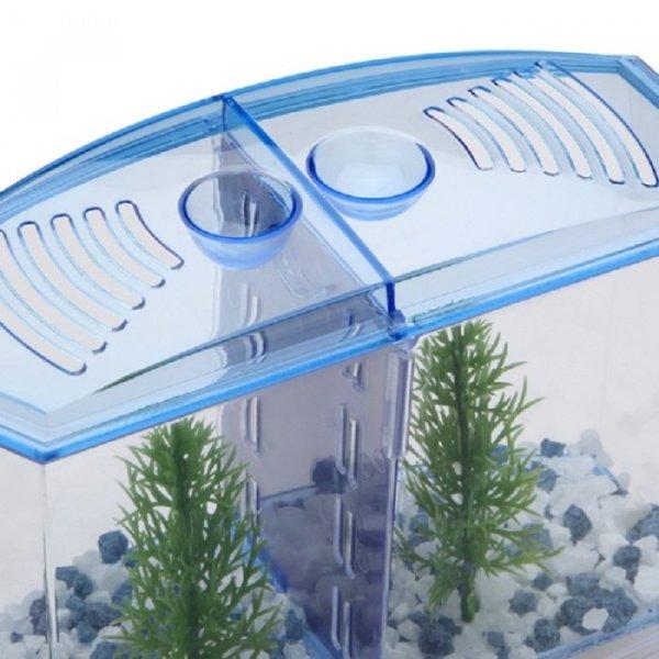אקווריום עם חוצץ הפרדה בין דגי קרב או דגים שונים