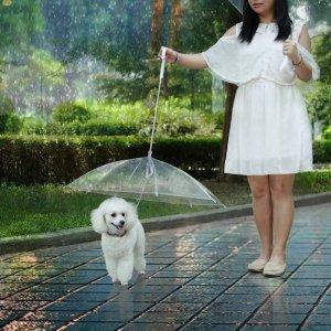 רצועת מטריה לכלבים