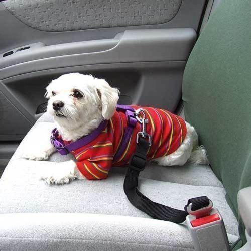 חגורת בטיחות לבעלי חיים ברכב